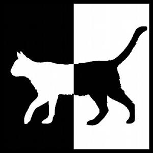Gato2_opt (1)