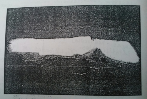 muestra4