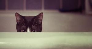 scaredy-cat-660x350