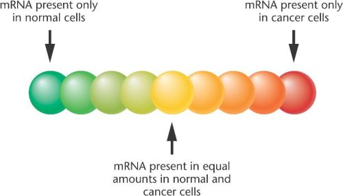 22_14-DNA_microarray-expression