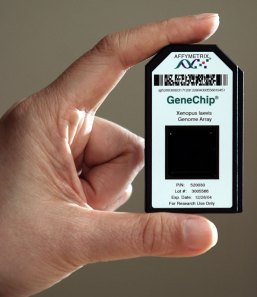 affymetrix_gene-chip_1_big