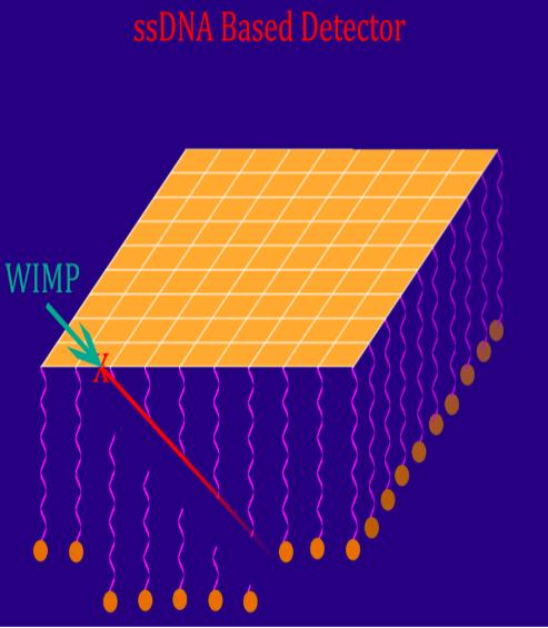 Se pone una capa de oro para que allí colisiona la partícula oscura. Si ocurre, un núcleo de oro irá rompiendo cadenas de ADN/ARN ancladas a la superficie de oro. La secuencia es conocida, así que viendo los trozos rotos se puede deducir la dirección de la que provenía la partícula oscura.